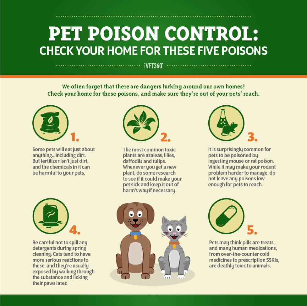 Pet Poison Prevention Infographic Pet poison, Poison