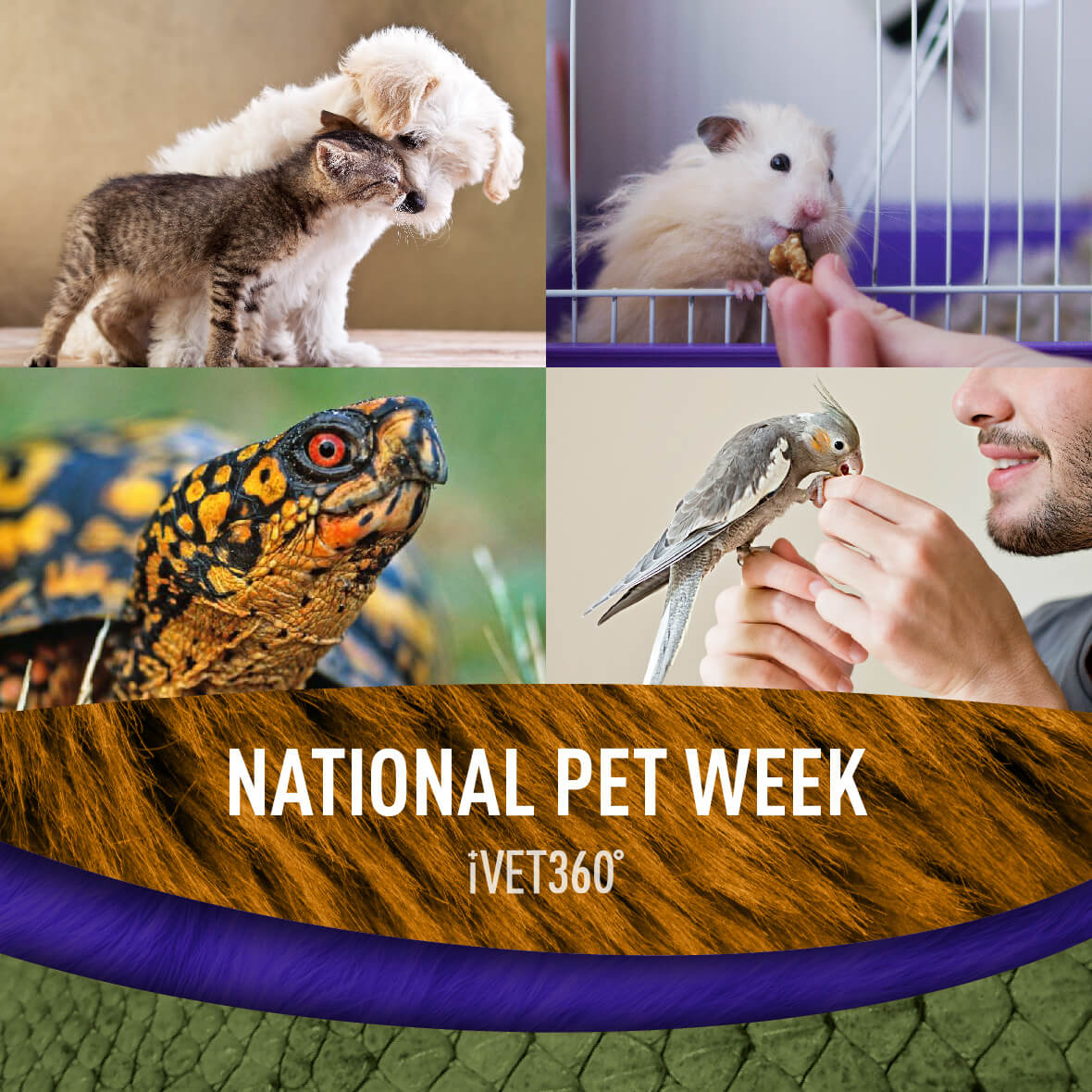 National Pet Week Pet holiday, Pets, Animals